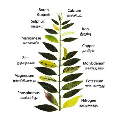 Micro Nutrients-Fertilizer Grade