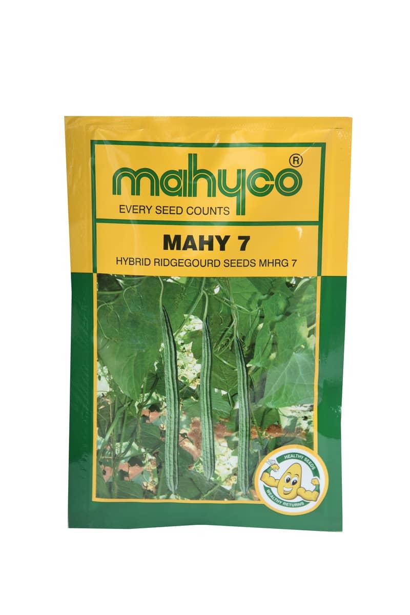 Mahy 7